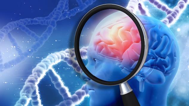 Représentation du lien entre les gènes et le développement du cerveau humain