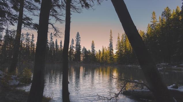 Vue d'un petit lac encerclé de conifères enneigés.