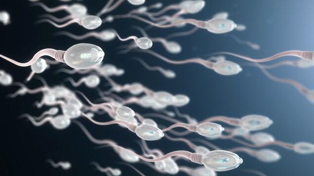 Une illustration de spermatozoïdes en mouvement.