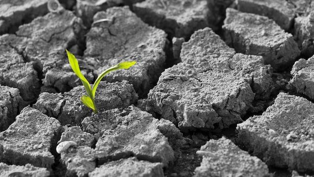 Une jeune pousse émerge d'un sol craquelé.
