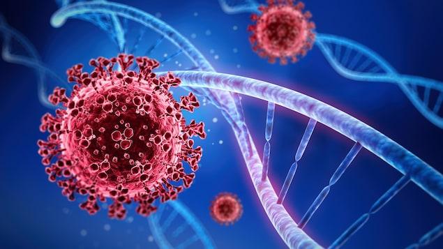 Représentation du coronavirus et d'un brin d'ADN.