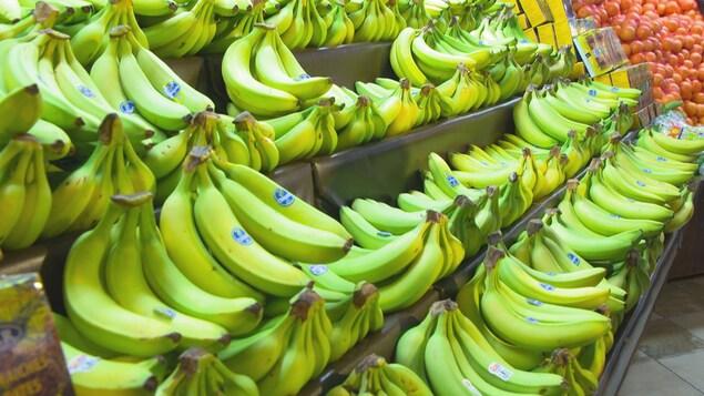 Un étalage de bananes encore vertes.