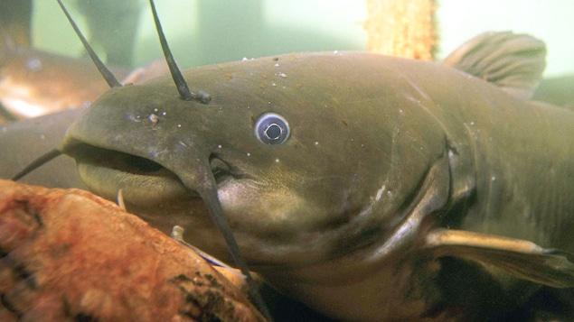 Un poisson au fond de l'eau