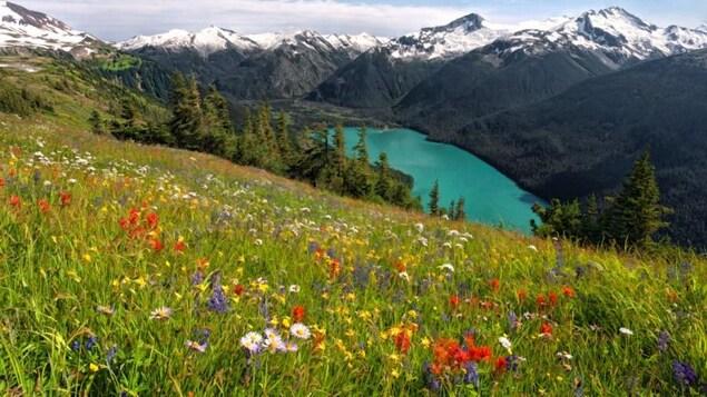 Un champ de fleurs sauvages avec un lac et des montagnes enneigées en arrière-plan.