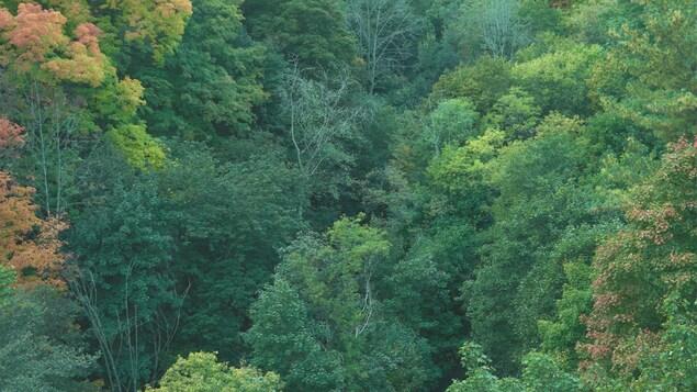 Pochette de l'album « Vaste »; vue aérienne d'une forêt