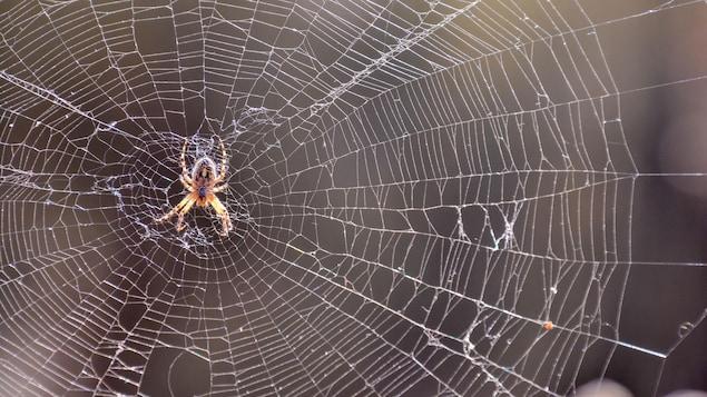 Une araignée se tient sur la toile qu'elle a tissée.