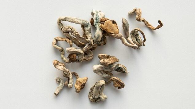 Des champignons séchés sont déposés sur une surface blanche.