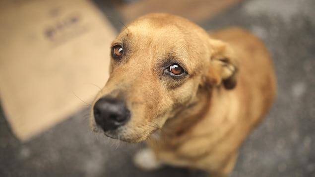 Un chien abandonné a le regard triste.