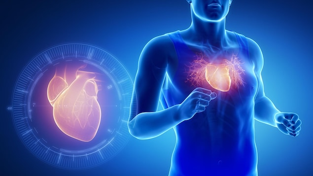 Une modélisation montre une personne dont le cœur est en activité.