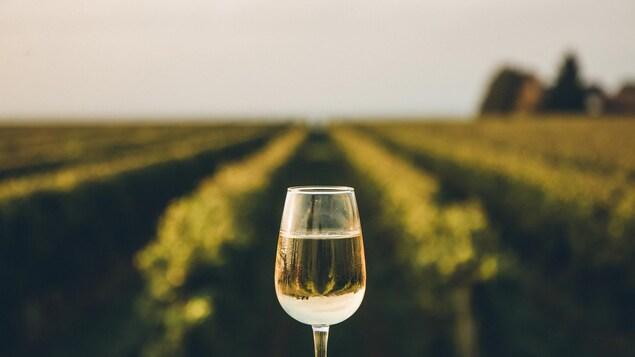 Un verre de vin blanc est présenté devant un vignoble.