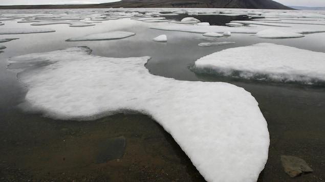 La glace flotte au abord de l'île d'Ellesmere, au Nunavut.