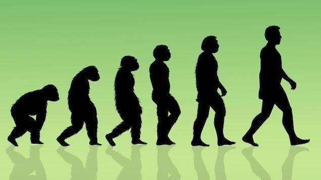 L'évolution humaine représentée par une illustration