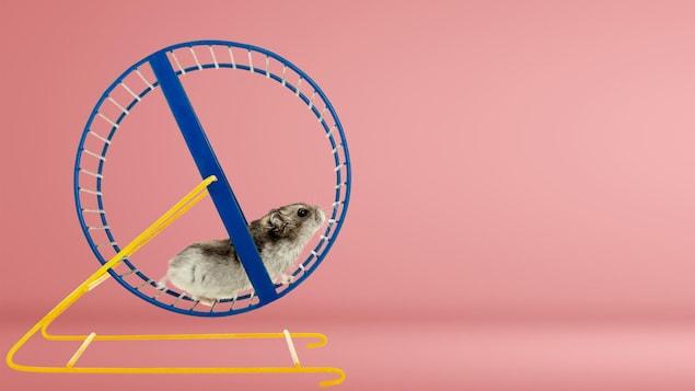 Un hamster court dans sa roue.