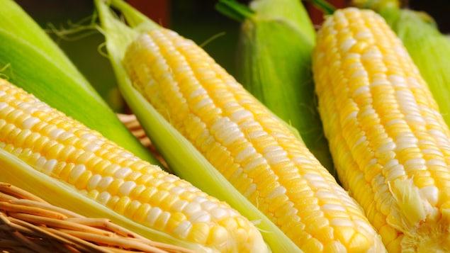 Du maïs dans un panier.