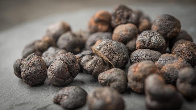 Récolte de truffes noires posées sur une table.
