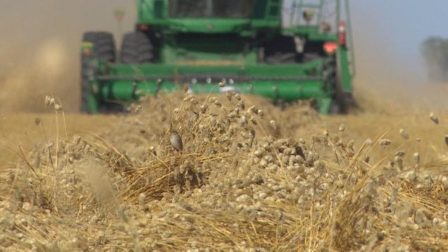 Un véhicule agricole avance dans un champ où se trouvent des épis et des oiseaux.