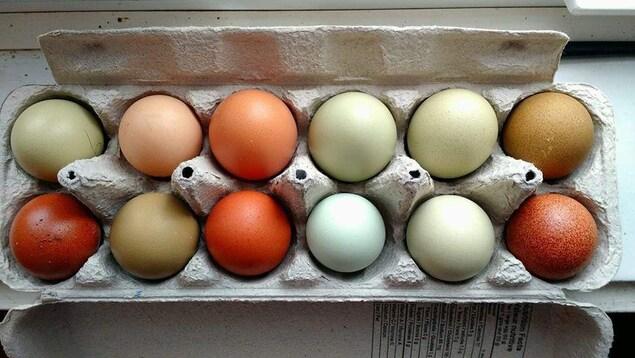 Oeufs pigments