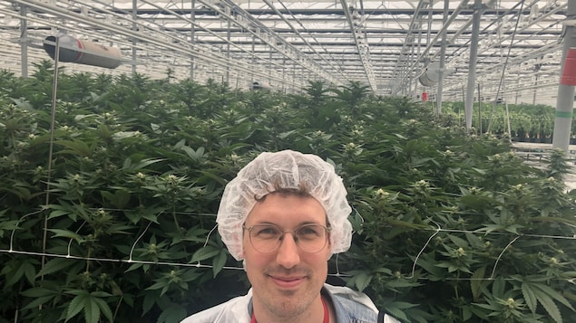 L'animateur Olivier Mercure devant des plants de cannabis d'UP Cannabis.