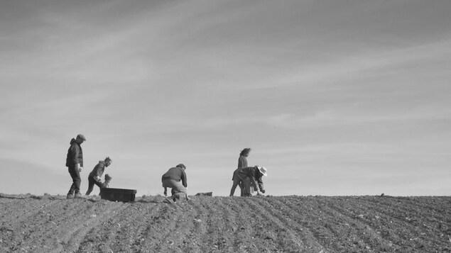 Photo en noir et blanc d'un groupe d'hommes et de femmes qui travaillent dans un champ.