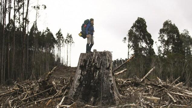 Photo de Sarah Marquis qui se tient sur une immense souche d'arbre dans une forêt.