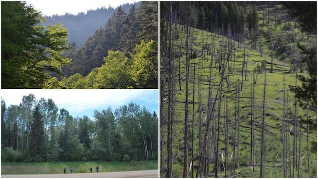 Des photos de forêts saskatchewanaises