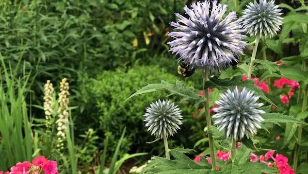 Une abeille sur une plante dans un jardin.