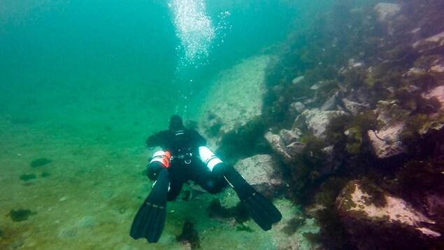 Hugo Lemieux fait de la plongée sous-marine et explore des roches, la faune et la flore à l'île Manowin.