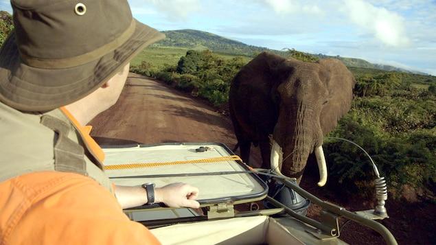 Zimbo l'éléphant a de bien grandes oreilles.