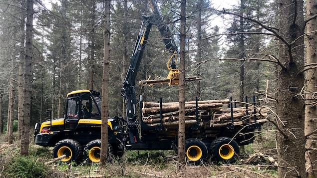 Un producteur forestier en action, dans son tracteur en forêt.