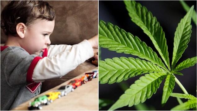 Montage photo avec un enfant et une feuille de cannabis.