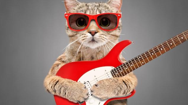 Un chat avec une guitare et des lunettes fumées.