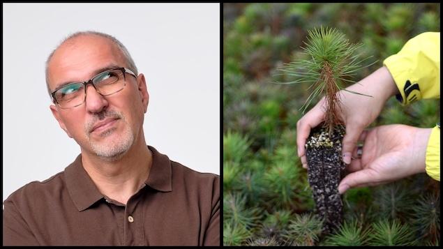 Montage avec un homme qui doute et un arbre à planter