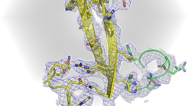 Un dessin représentant un anticorps.