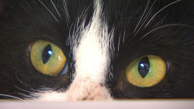 Des yeux de chat.