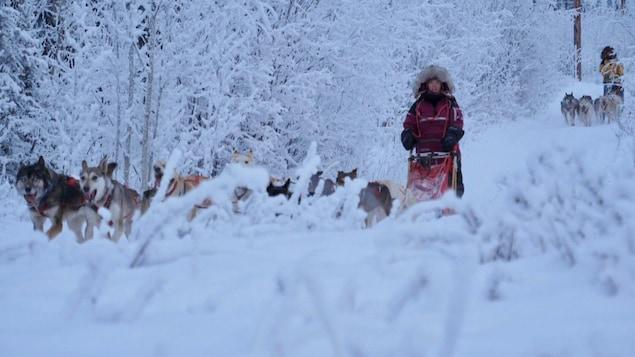 Une fille pilote un traîneau à chiens. Derrière elle, une autre personne en fait de même. Tout autour et devant elles, les arbres et plantes sont tous blancs de neige.