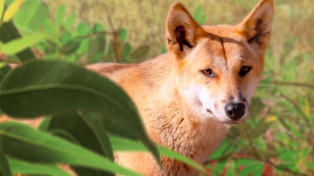 Un animal ressemblant à un chien dans un champ avec des feuilles.