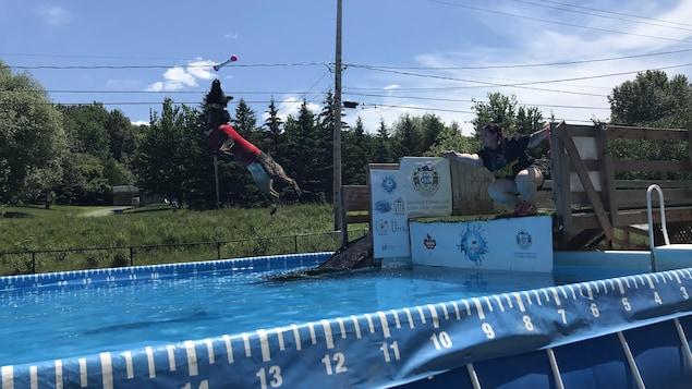 Un chien saute dans une piscine.