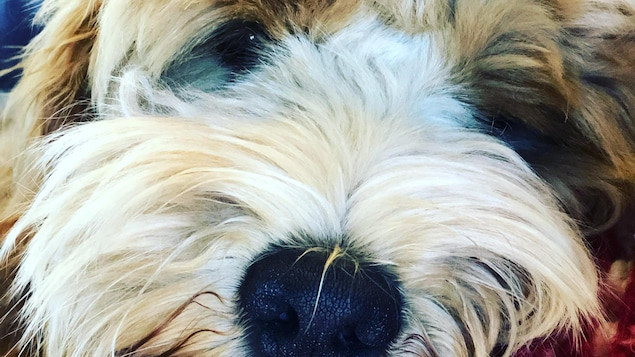 Gros plan de la face d'un chien