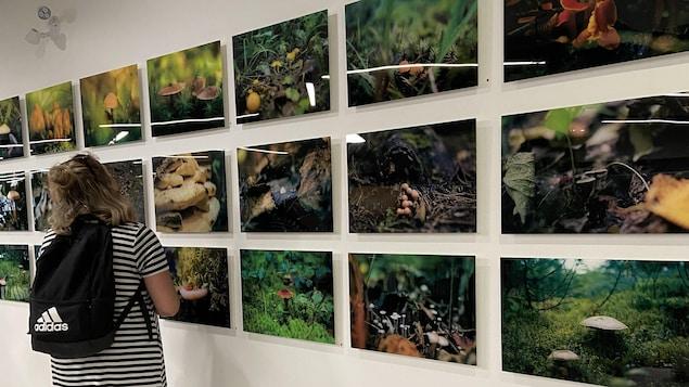 Une fille regarde l'exposition de photographies de champignons.