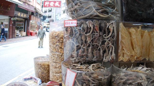 Des étalages d'hippocampes séchés dans une rue de Hong kong.