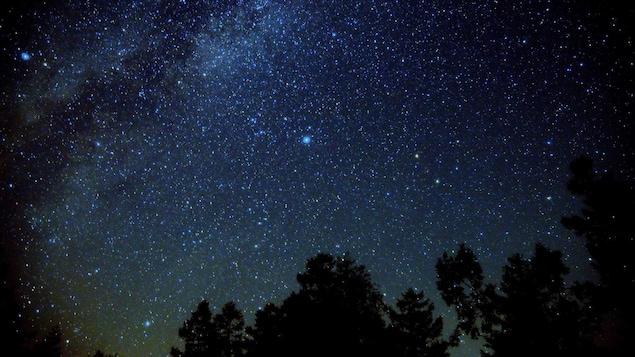 Un ciel étoilé et des arbres pendant la nuit.