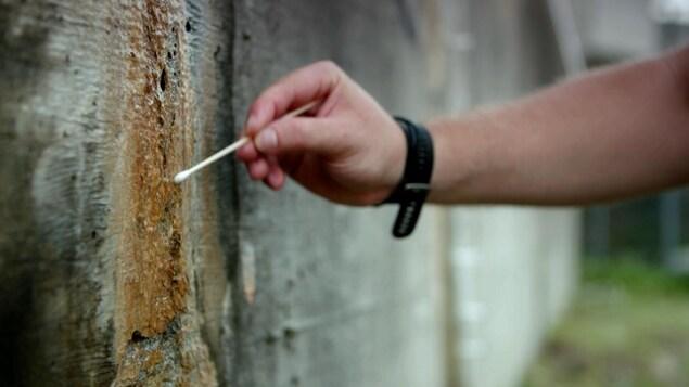 Un chercheur prend un échantillon sur un mur de béton.