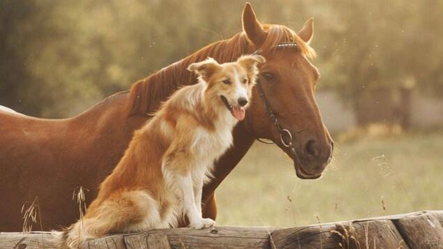 Un cheval et un chien posent côte à côte.