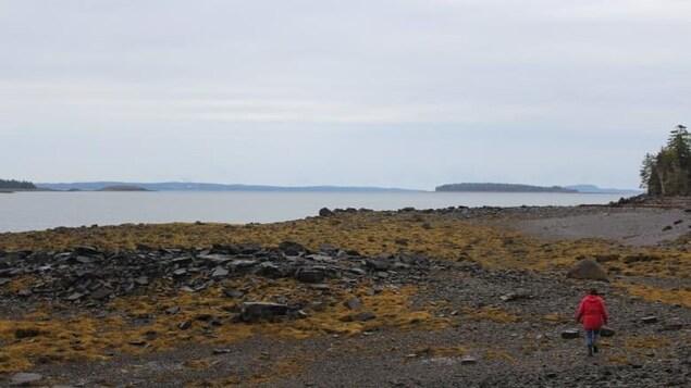 Krista Beardy marche au loin sur la plage.