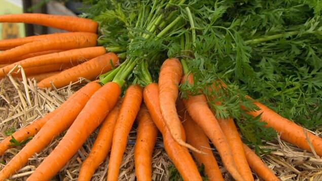 Un gros bouquet de carottes en feuilles.