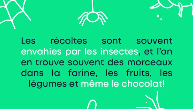 Insectes au menu : Les récoltes sont souvent envahies par les insectes, et l'on en trouve souvent des morceaux dans la farine, les fruits, les légumes et même le chocolat!