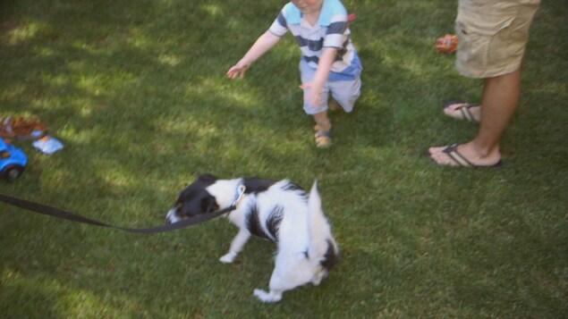Le chien fuit à l'approche de l'enfant.