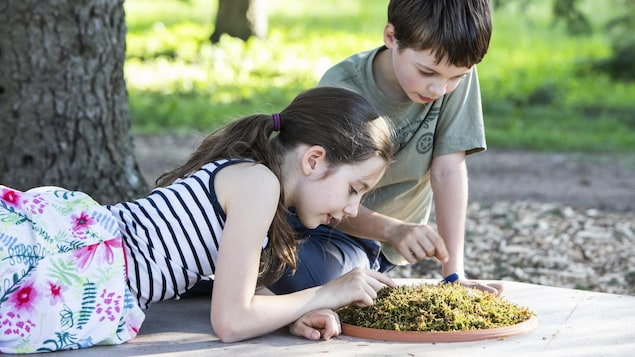 Deux enfants examinent du lichen.