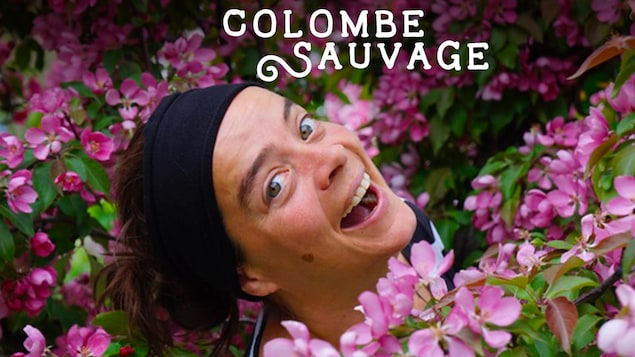Colombe sauvage