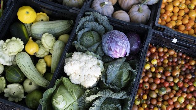 Récoltes de fruits et légumes au Jardin botanique de Montréal.